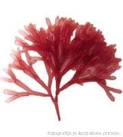 gel crvenih algi