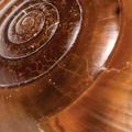 puževa sluz - snail gel - puževa krema - gdje kupiti