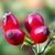 ulje ploda divlje ruže